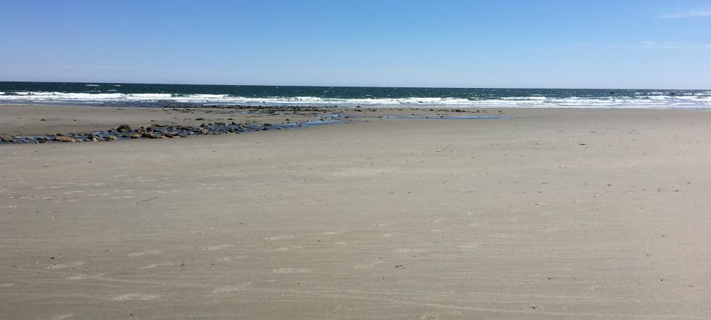 north-beach-1000x450